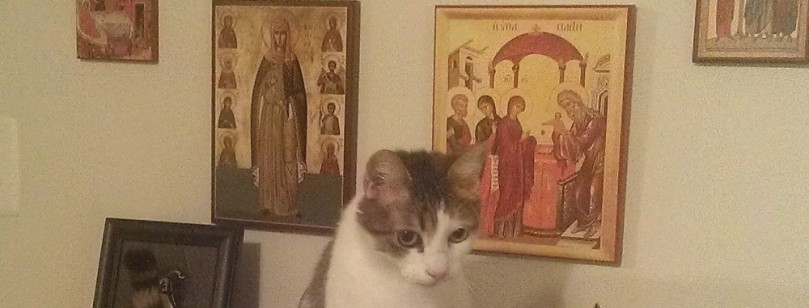 cropped-prayerful-cat