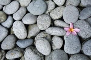 flower-in-stones
